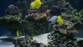 动物 水族馆 鱼 23789323