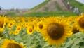ひまわり園 23790038