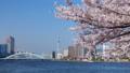 桜とビル群と隅田川 23894327