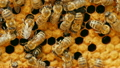 honeycomb, bee, insect 23901392