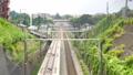 the, tokaido, shinkansen 24036450