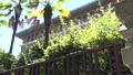 神奈川県庁(横浜市中区)外観 資料映像 24091987