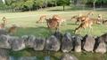 Deer in Nara Park 24168058
