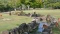 Deer in Nara Park 24168059