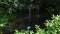 陰陽の滝 滝口 鎌倉 24467775