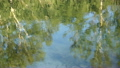 Shot of lake scenic in summer. Blurred nature 24524452