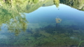 Shot of lake scenic in summer. Blurred nature 24524455
