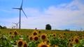 向日葵 風力発電 風車の動画 24532044