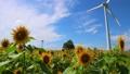 向日葵 風力発電 風車の動画 24532045