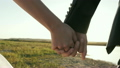 couple holding hands at sunset in the field 24567228