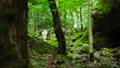 スライダー撮影 東京の大自然 奥多摩町 渓谷 岩 苔 登山道 植物 緑 森 フォーカス送り 24781718