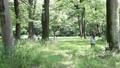 木の陰から 小学生 飛び出す 走る 24818379