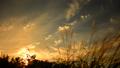 秋の風景 ススキと夕日 24818543