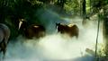 horses, herd, running 24992408