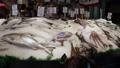 マーケット 魚 シーフードの動画 25153359