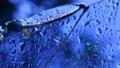 ฝนตก,ฝน,น้ำ 25179643