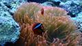海葵和海葵 25204030