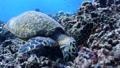 sea, turtle, tropical 25204054