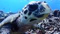 sea, turtle, tropical 25204055
