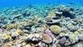 การถ่ายภาพใต้น้ำของ Akajima ในโอกินาว่า Snorkeling การถ่ายภาพเคลื่อนไหว 25208030