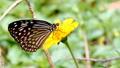 蝴蝶 昆虫 虫子 25237607