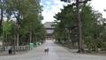 [도다이지 대불전과 사슴】 나라현 나라시 雑司 도시 25364268