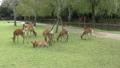 Deer in Nara Park 25366183