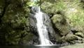 河津七滝上流の二階滝 25461067