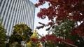 紅葉とタワービル りんかい線 テレポート駅 東京臨海副都心 25555514