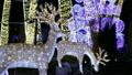 Christmas Deers new year night decor atmosphere 25566289