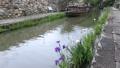 6月 近江八幡の八幡掘風景 25576174