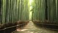 竹林の道 竹林 竹の動画 25576217