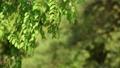 春風に揺れる樹林 25639666