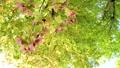光に満ちた樹林帯のローアングル撮影 25639712