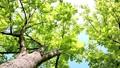 光に満ちた樹林帯のローアングル撮影 25639713