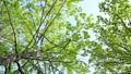 光に満ちた樹林帯のローアングル撮影 25639714