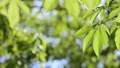 光に満ちた樹林帯のローアングル撮影 25639715