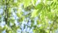 光に満ちた樹林帯のローアングル撮影 25639716