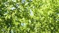 光に満ちた樹林帯のローアングル撮影 25639717