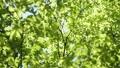 光に満ちた樹林帯のローアングル撮影 25639718