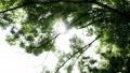 夏の日の木漏れ日 25642123