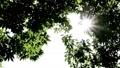 夏の日の木漏れ日 25642124