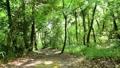 森の小径と差し込む光 25642213