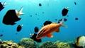 沖縄 阿嘉島のニシハマビーチ 水中撮影 固定 25732660