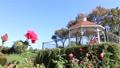 Doshishima公園玫瑰園在秋天 25764410