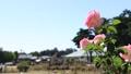 Doshishima公園玫瑰園在秋天 25764413