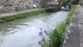6月 近江八幡の八幡掘風景 25785629