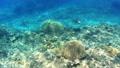 沖繩島Akajima綠海龜的水下攝影 25868997