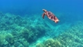 沖繩島Akajima綠海龜的水下攝影 25869000