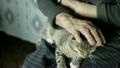 ペット 愛玩動物 ねこの動画 25889841